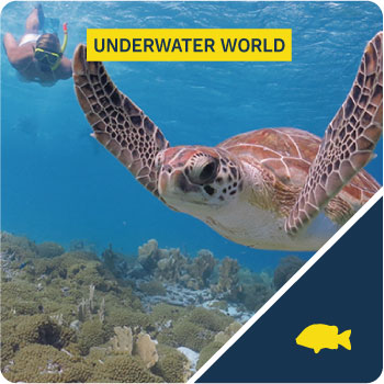 underwater world tour